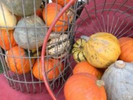 basket of pumpkins