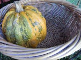 pumpkin in a basket