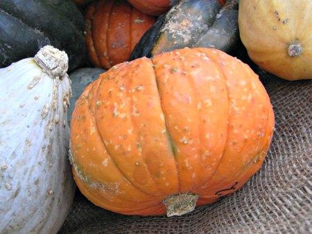 pumpkin mas