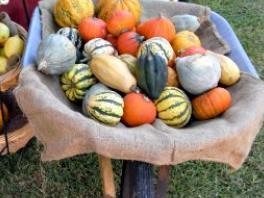 wheelbarrow of pumpkins