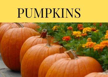 easy grow pumpkin tips