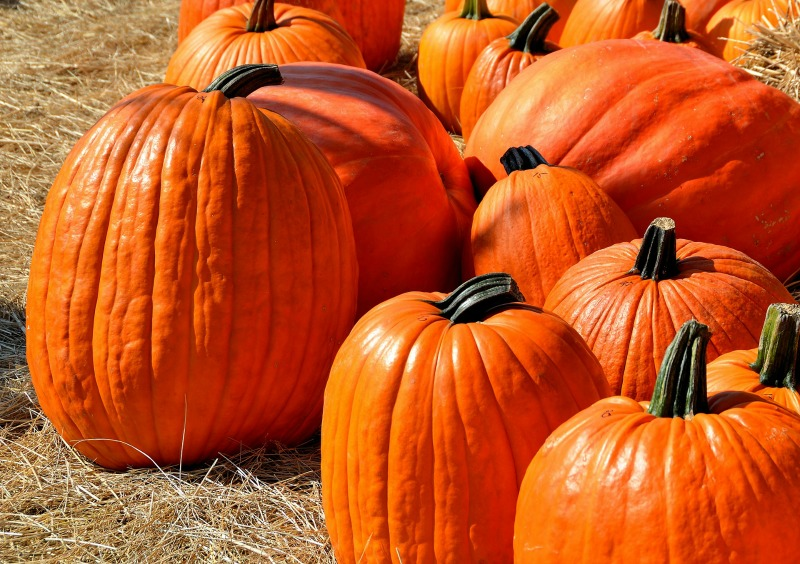 All you need to know about how to grow pumpkins
