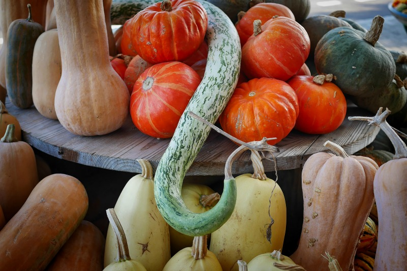 Smaller pumpkin varieties and squashes