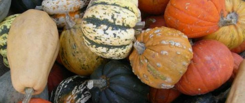 Small pumpkins for soups