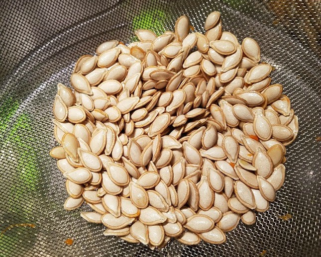 Cleaned pumpkin seeds, ready to roast