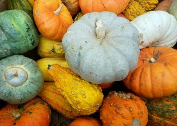 Pumpkin Recipes That Are Healthy And Delicious