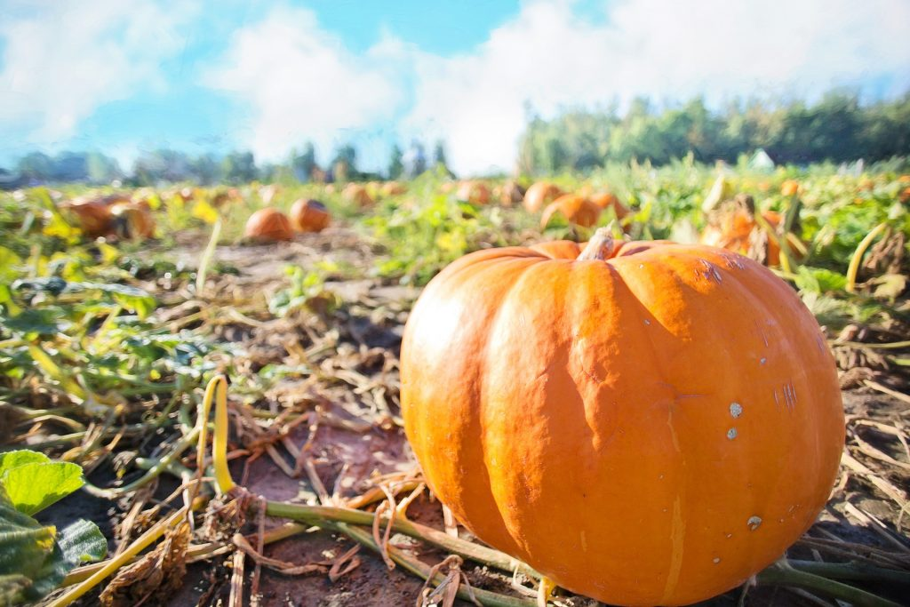 how to grow giant pumpkins from seeds
