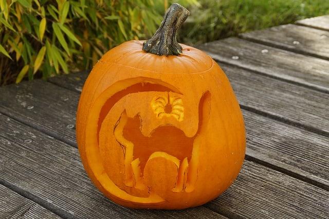 free pumpkin cat stencils