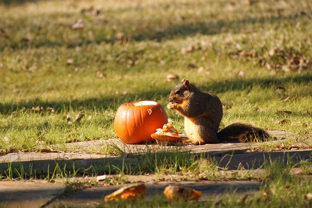 how to keep squirrels away from pumpkins