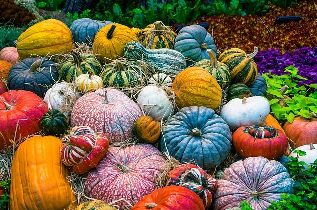 pumpkin names