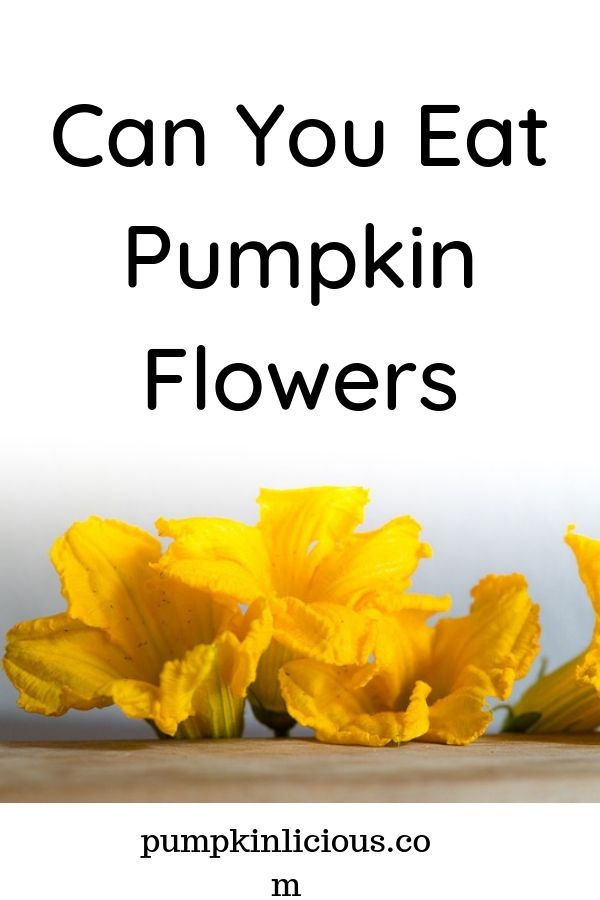 are pumpkin flowers edible
