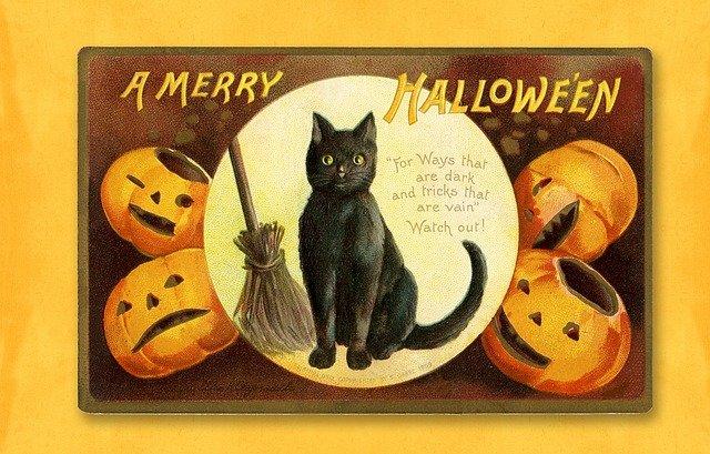 pumpkin cat ideas