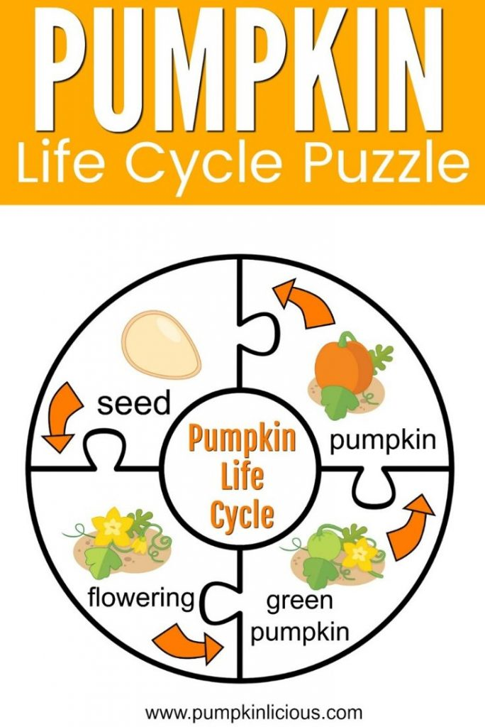 life cycle of a pumpkin puzzle