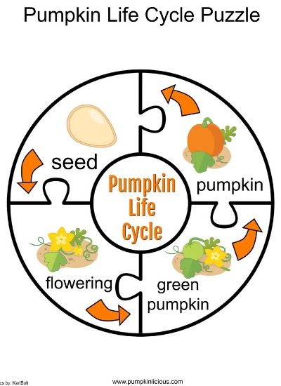 pumpkin life cycle puzzle