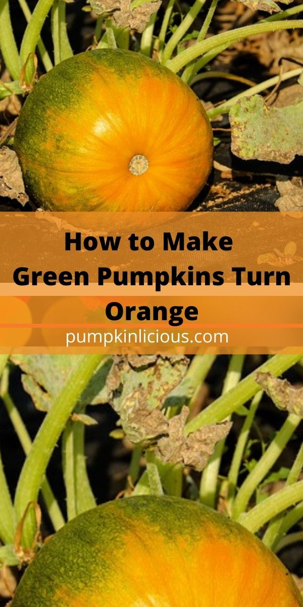 How to Turn Green Pumpkins Orange
