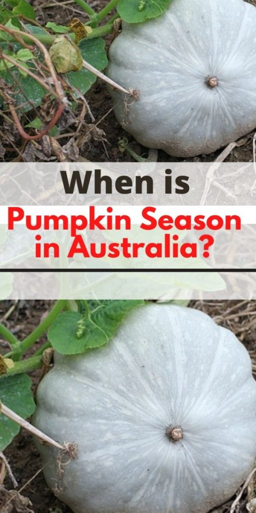 When is Pumpkin Season in Australia